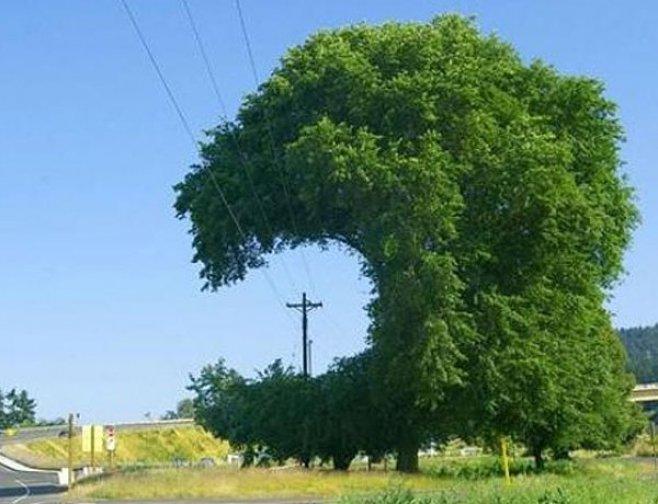 Upozornění k odstranění a okleštění stromoví a jiných porostů