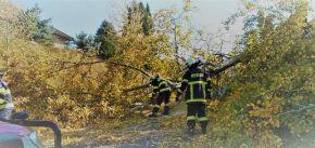 Spadlý strom na komunikaci