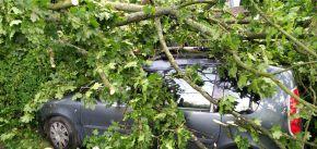Pád stromu na zaparkované auto