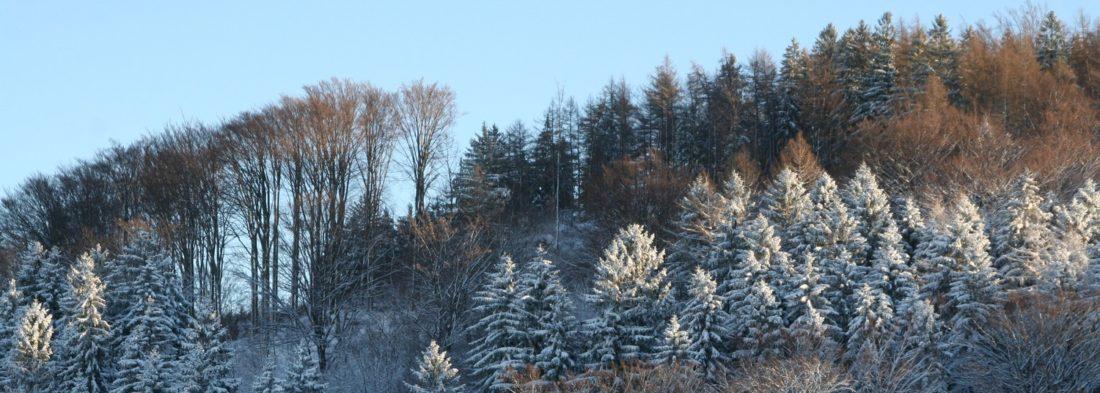 Zima v Oldřichově