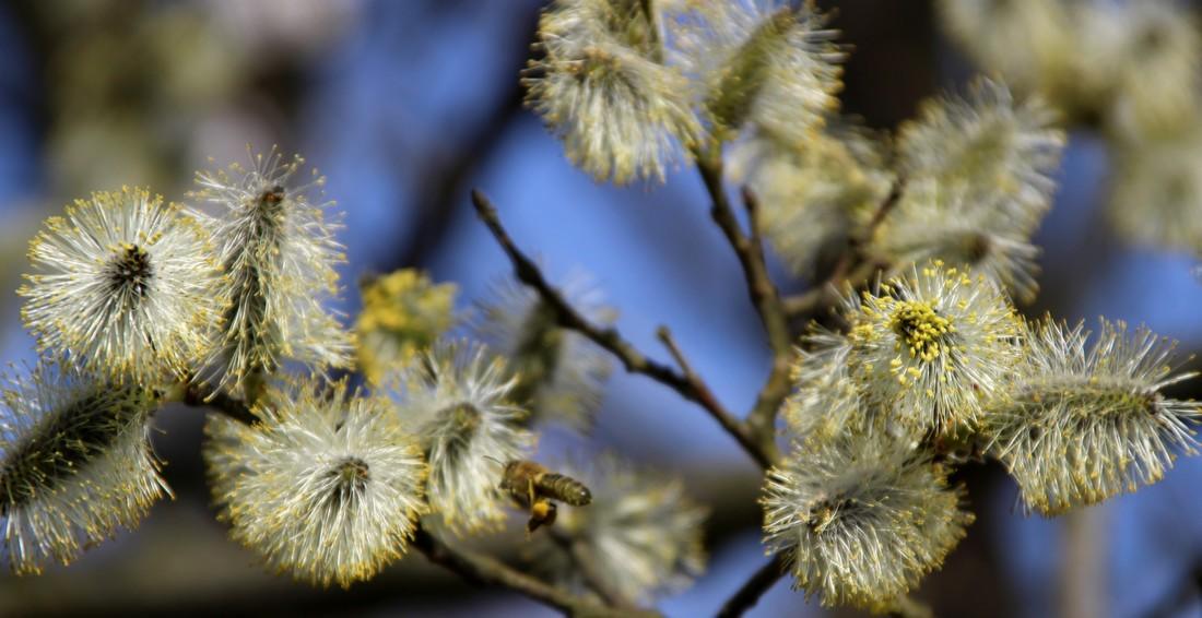 Klubík – Po stopách včeliček