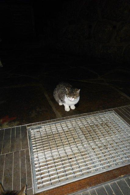Nalezené kotě