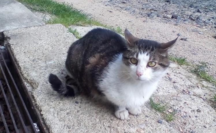 Nalezená kočička